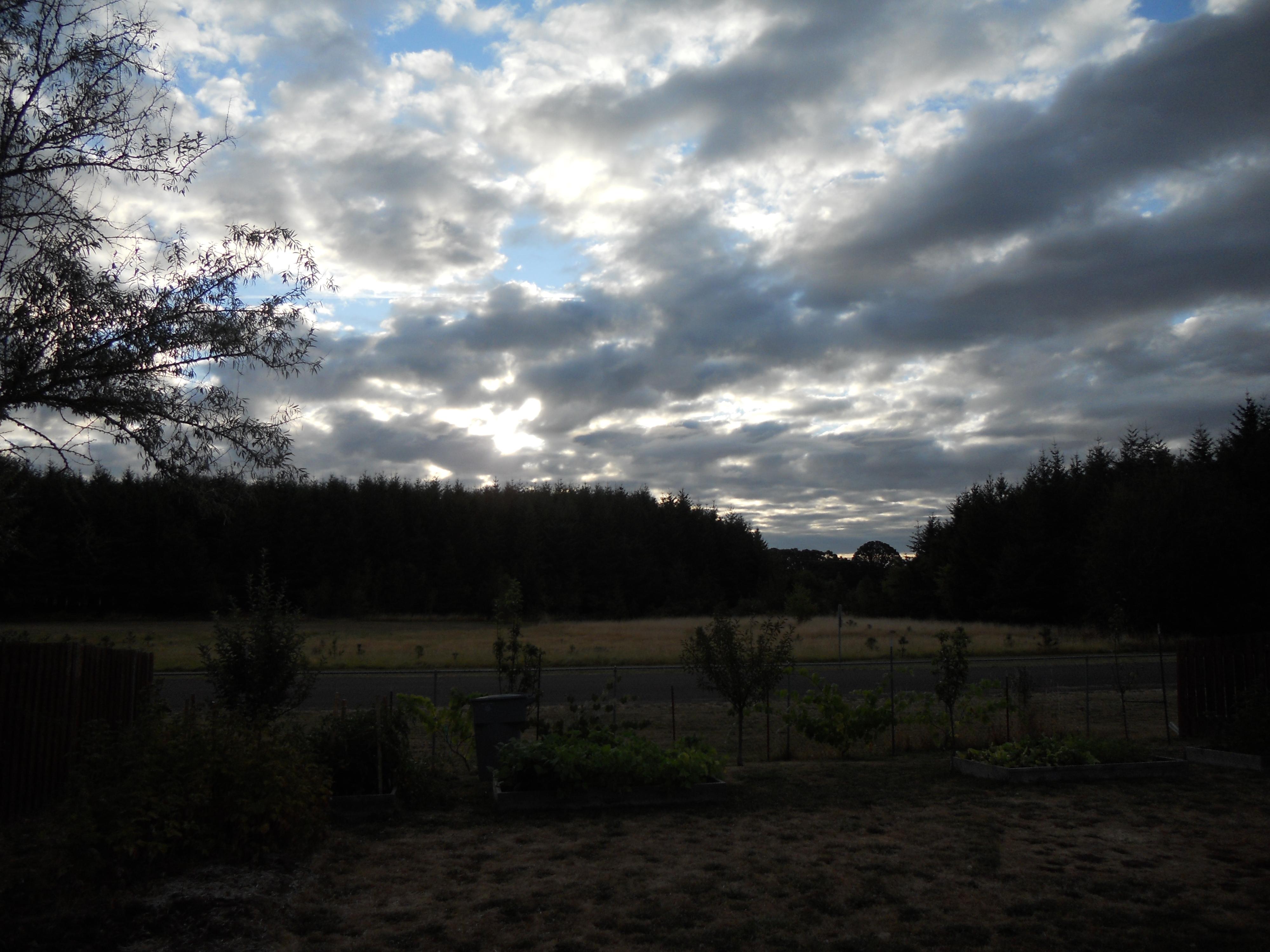 Tree sunrise 2 008.JPG