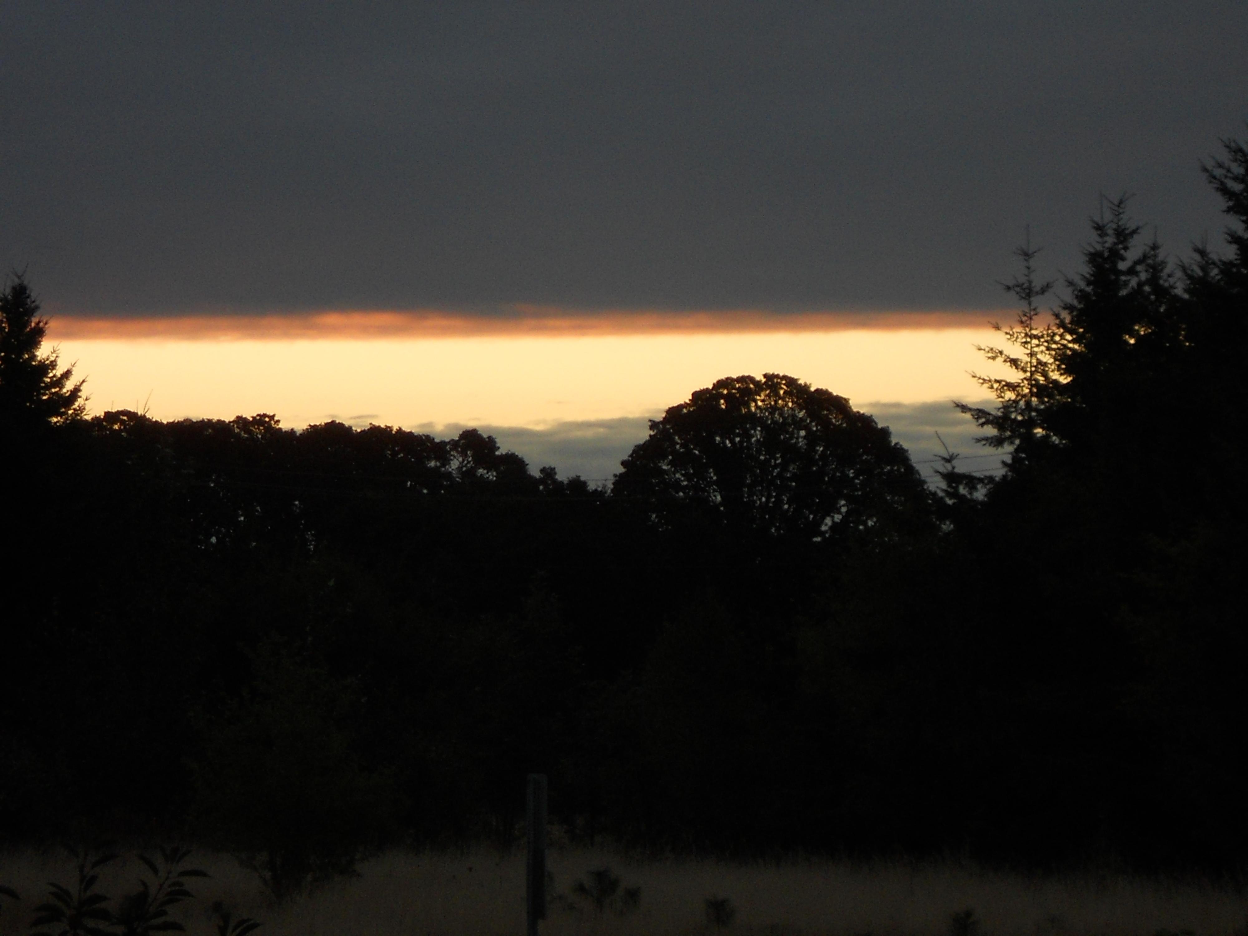 tree sunrise 004.JPG