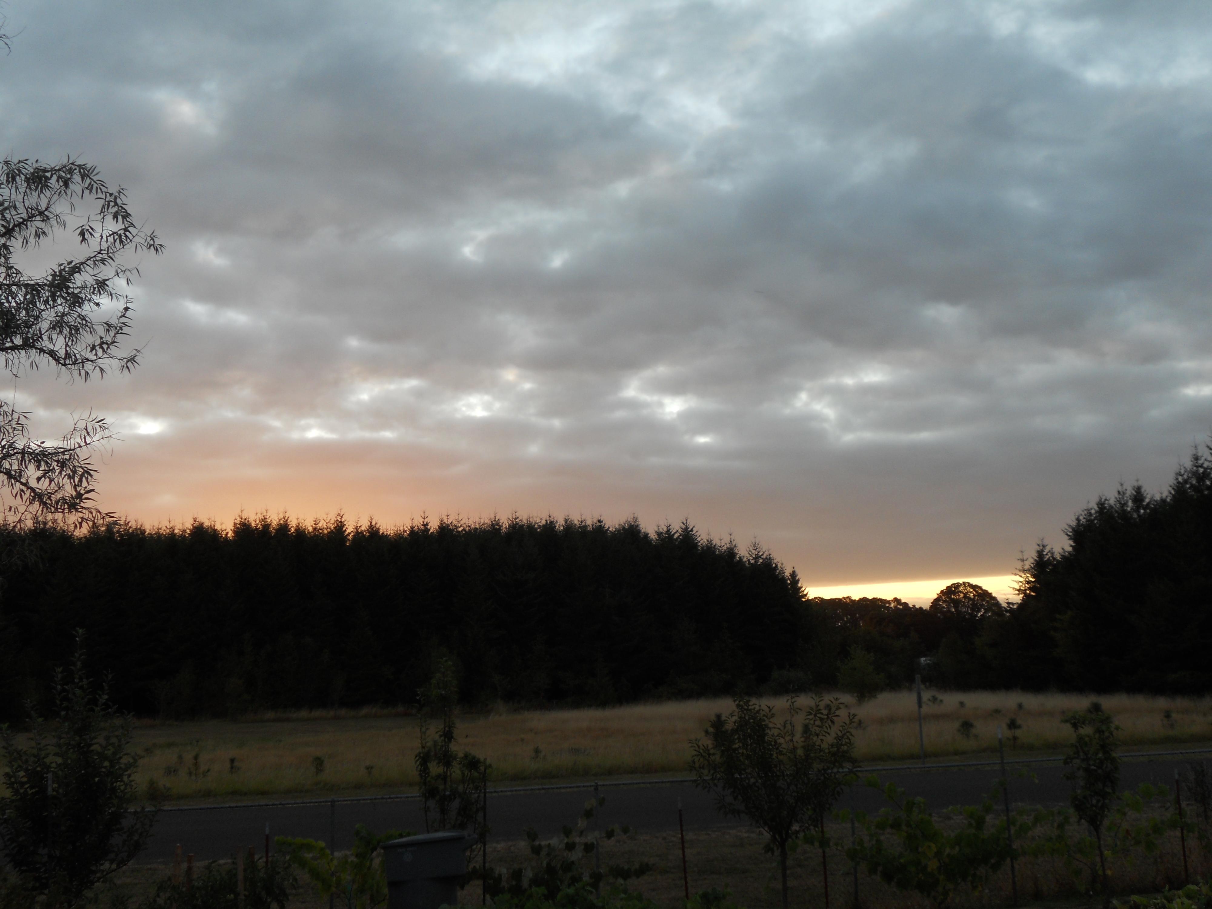 tree sunrise 011.JPG