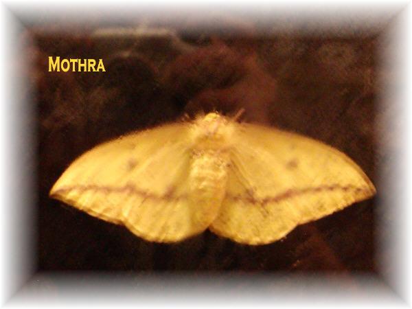 Mothria2TW6.jpg